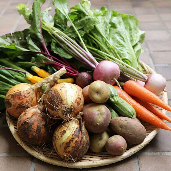 竹岡農園の野菜セット