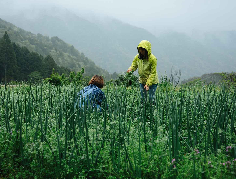 竹岡農園の農業