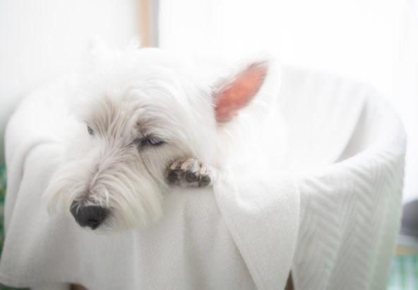 犬の酵素風呂治療