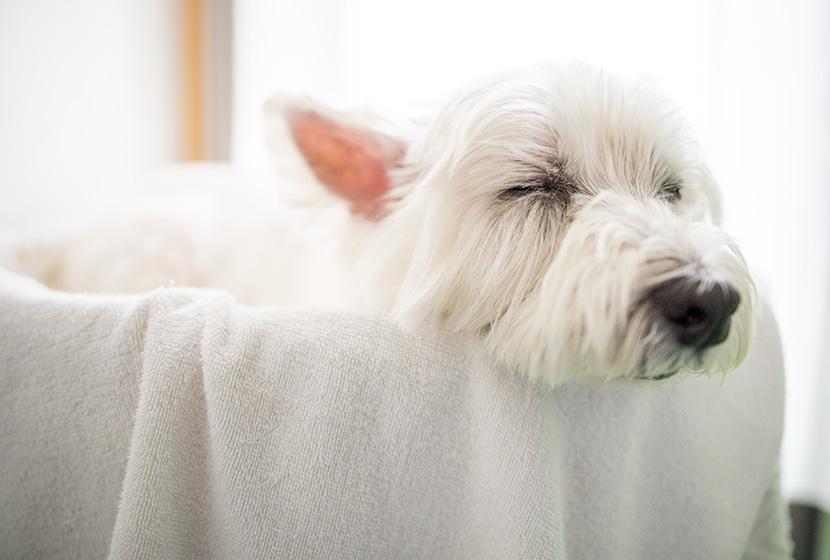 犬の酵素風呂