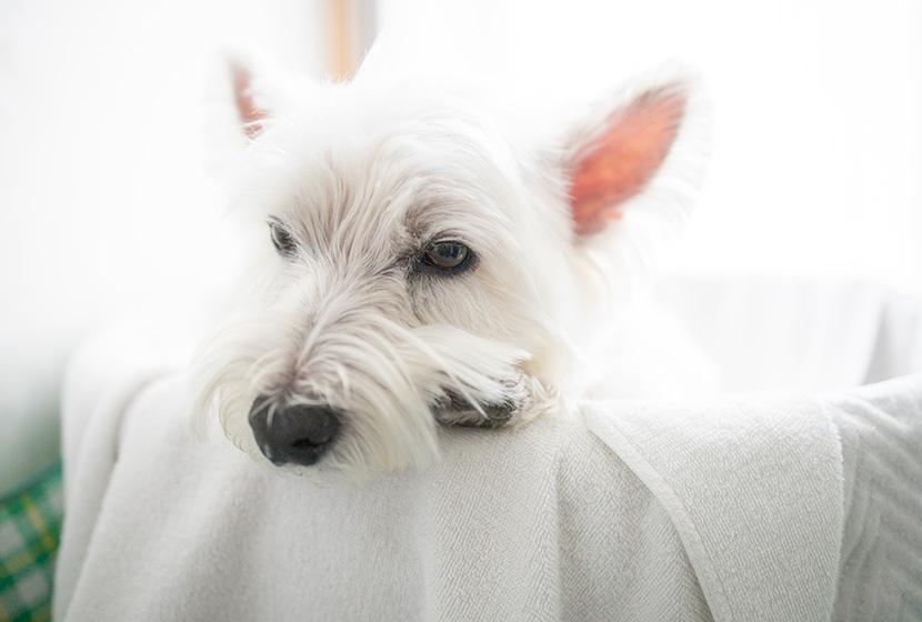 酵素風呂に入る犬